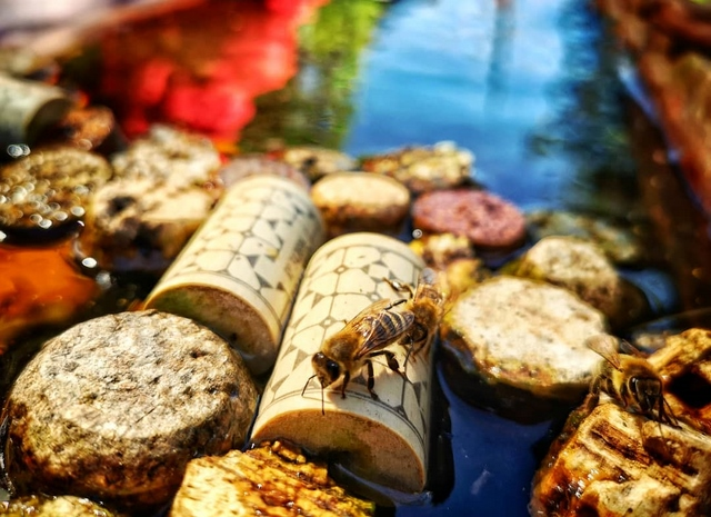 bee water bowl with wine corks