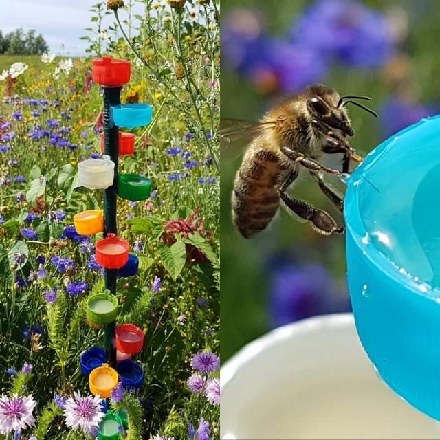 bee water feeder diy from bottle caps