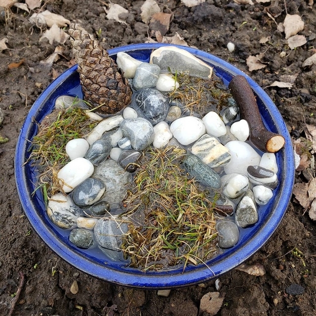 bee water garden with moss and pebbles