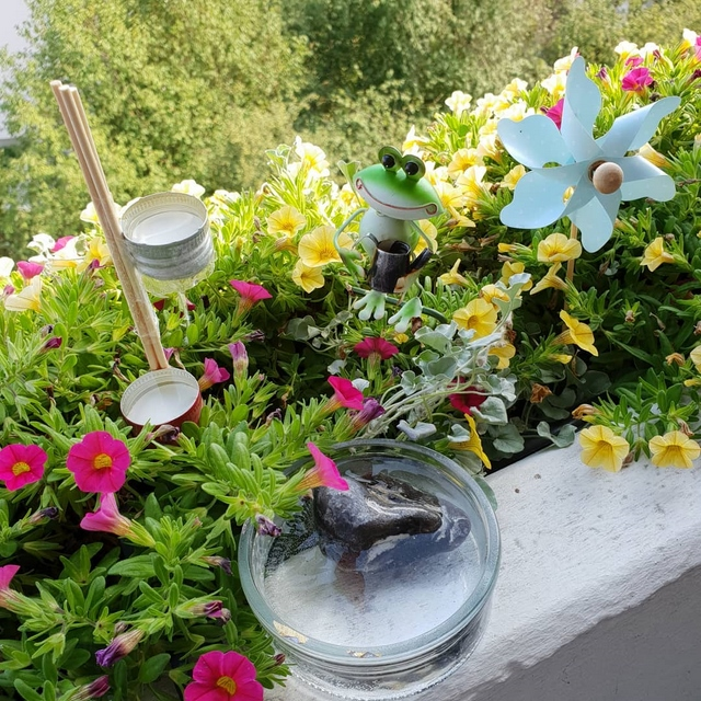 bee water source in window boxes on balcony with flowers