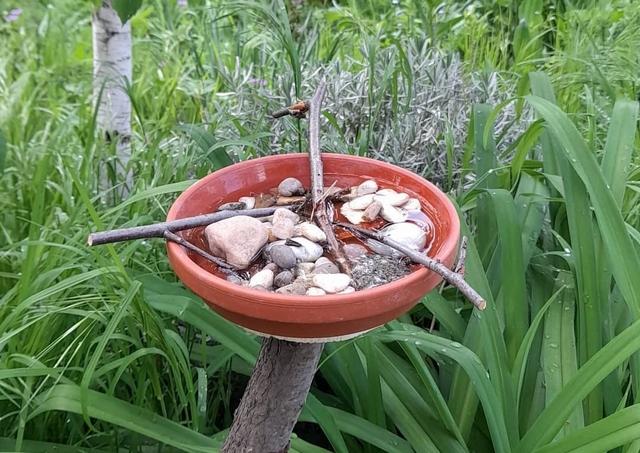 bee watering station in terracotta plate