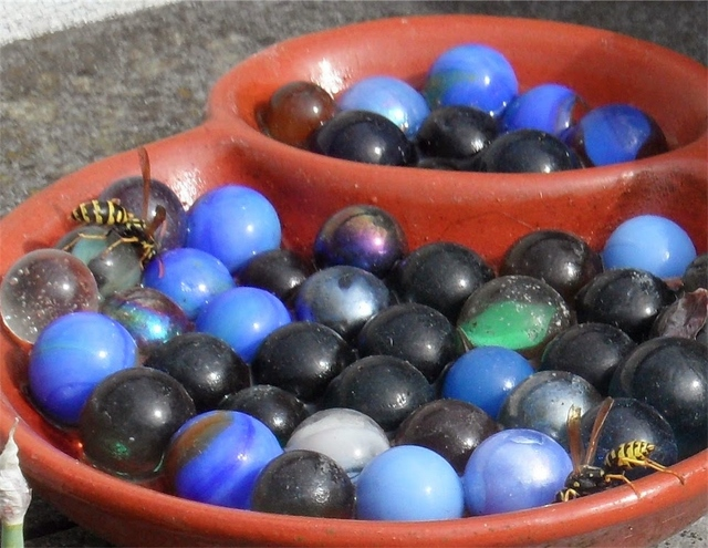 bee watering station with marbles and terracotta trays