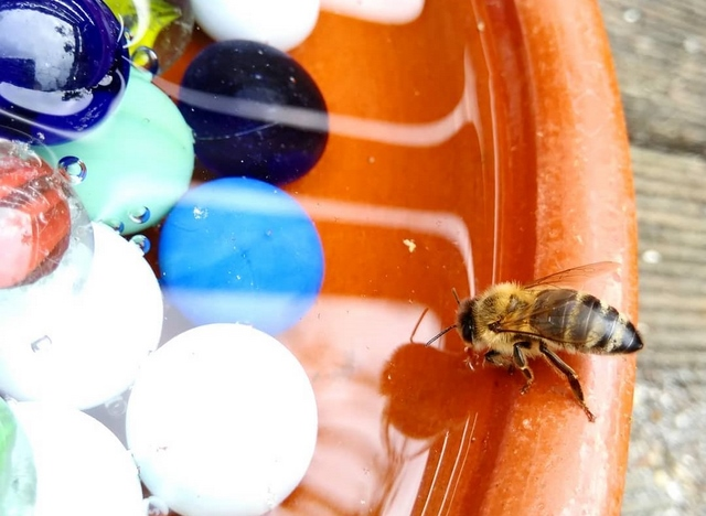 do bees need water