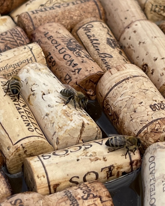 floating wine corks in water for bees