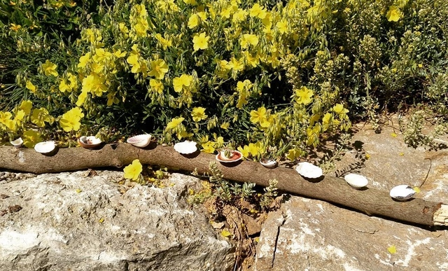 handmade bee water source from a branch and seashells