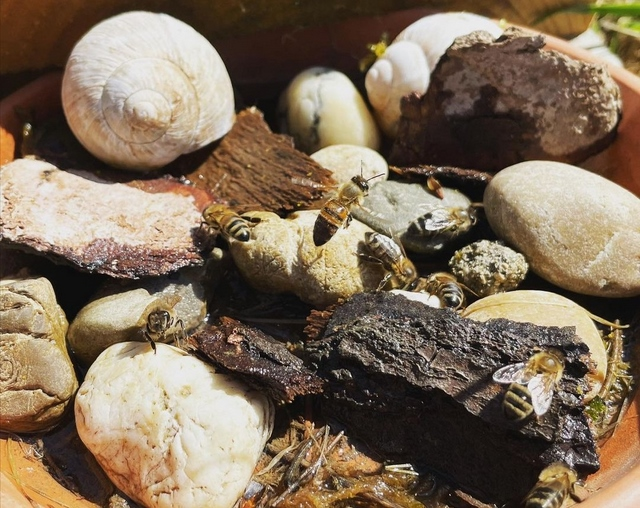 water for bees in summer